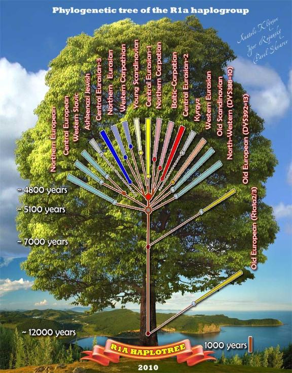drzewo_ru1