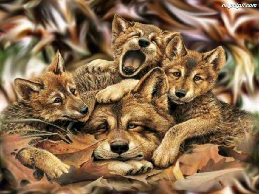 mlode-mama-wilk-trzy