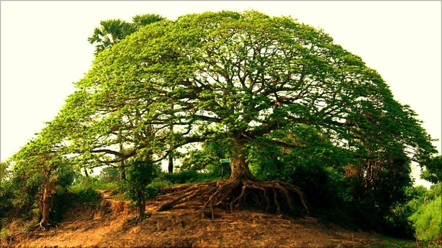Drzewo-Świata