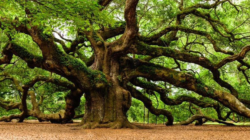 Zielone-Świątki-Święto-Drzew